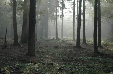 forest-194483_640